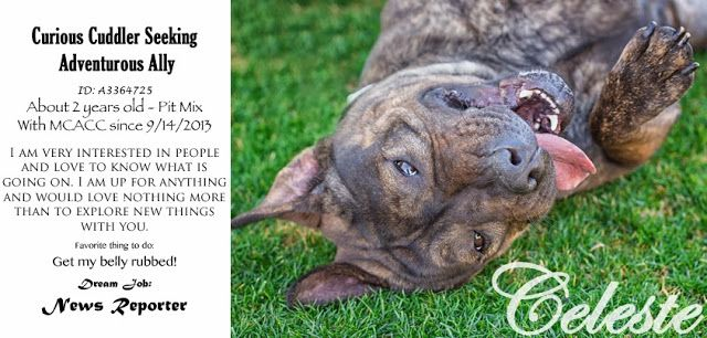 Adoptable Dogs Pet Photography Shelter Dogs Dog Adoption
