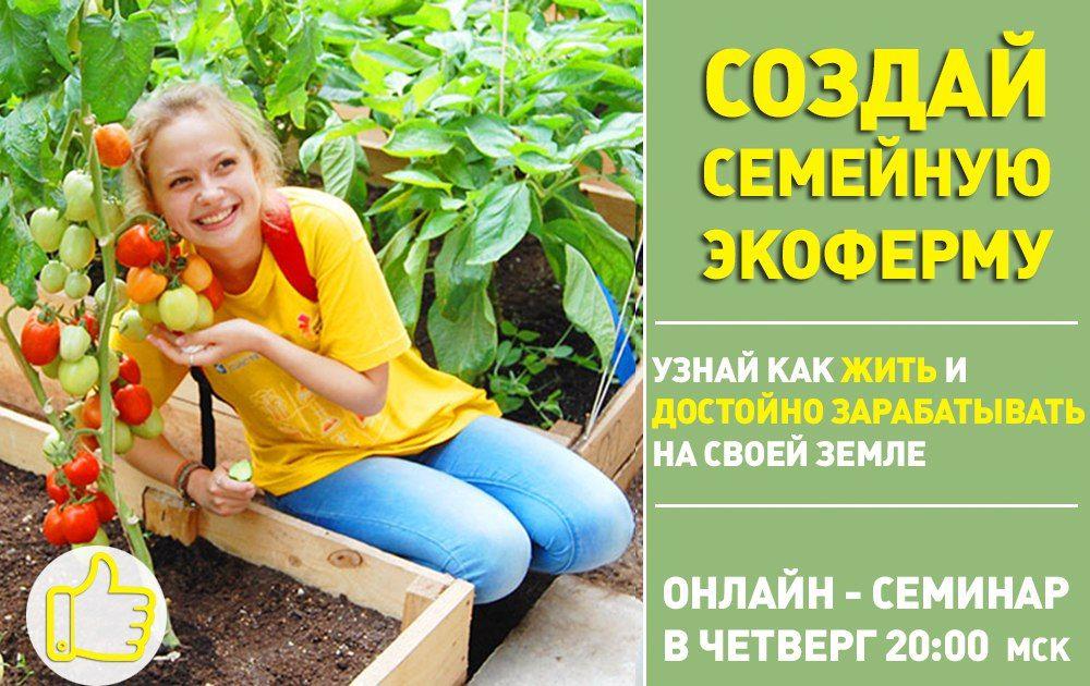 Огород выращивать дача рецепты