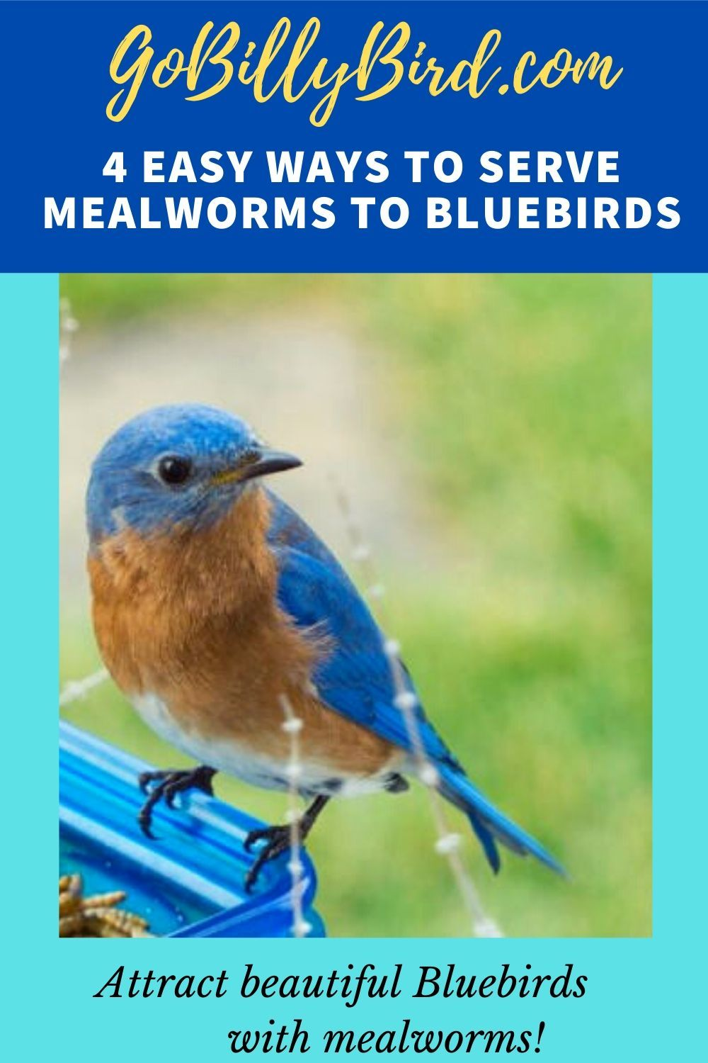4 easy ways to serve mealworms to your bluebirds in 2020