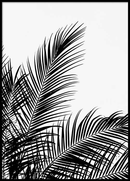 Black palm tree two Poster in der Gruppe Poster / Größen und Formate / 50x70cm bei Desenio AB (3524) #deseniobilderwand