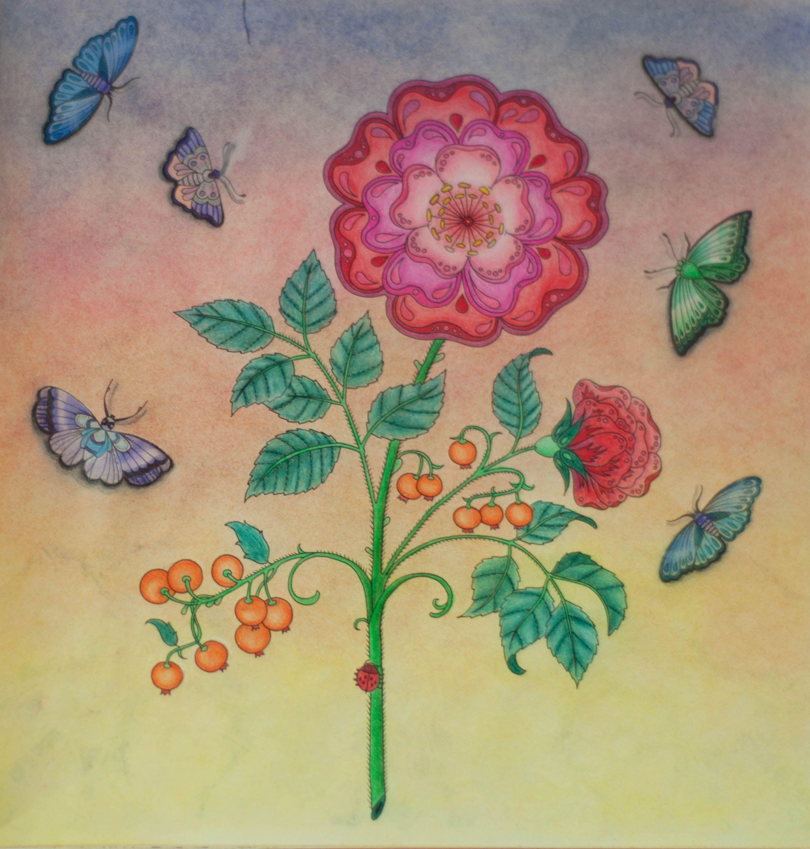 Paginas Inspiradoras Dos Livros Jardim Secreto Floresta Encantada E Outros De Colorir Para Adultos