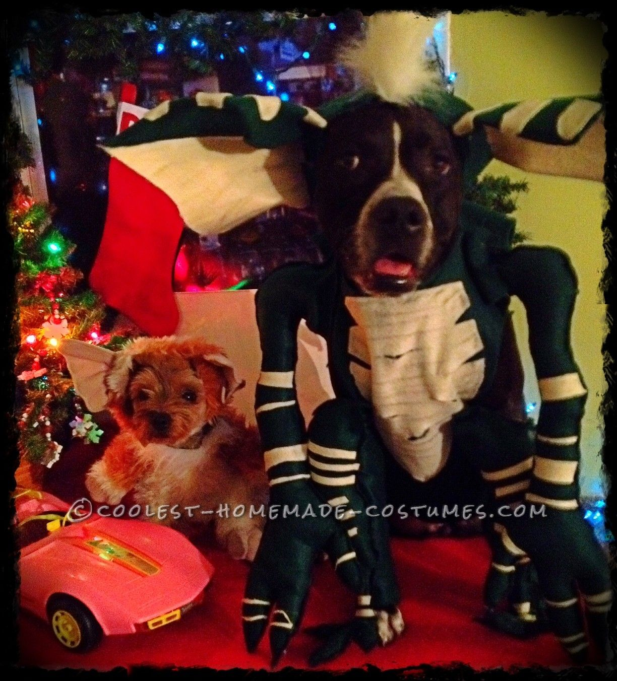 Cool Homemade Pet Dogs Costumes Gremlins Pet Costumes Contest