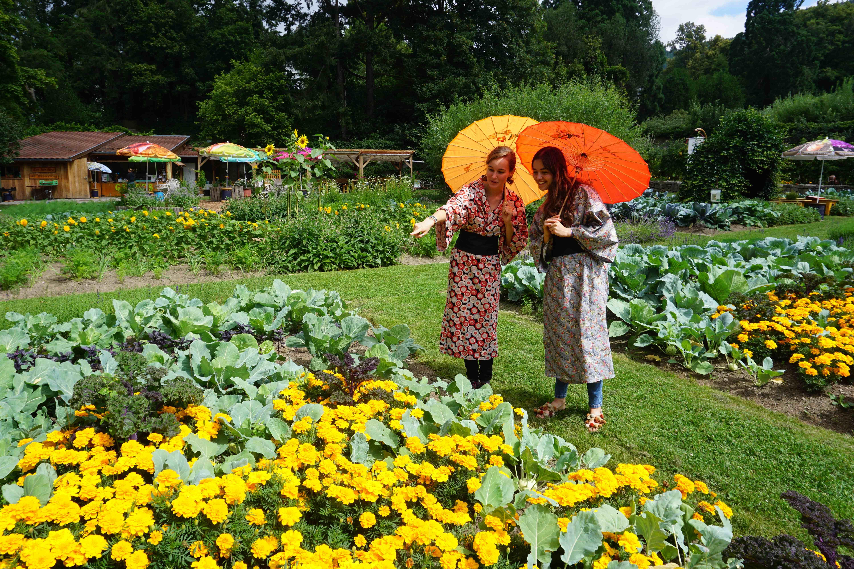 Japon Parc De Wesserling Jardin Alsace Vosges Parc De Wesserling Lever De Soleil Jardins