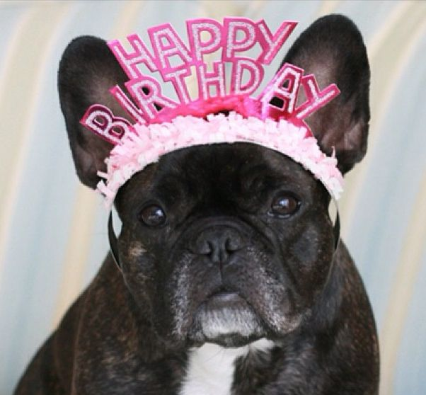 7 Rai511 Happy Birthday French Bulldog Cute French Bulldog