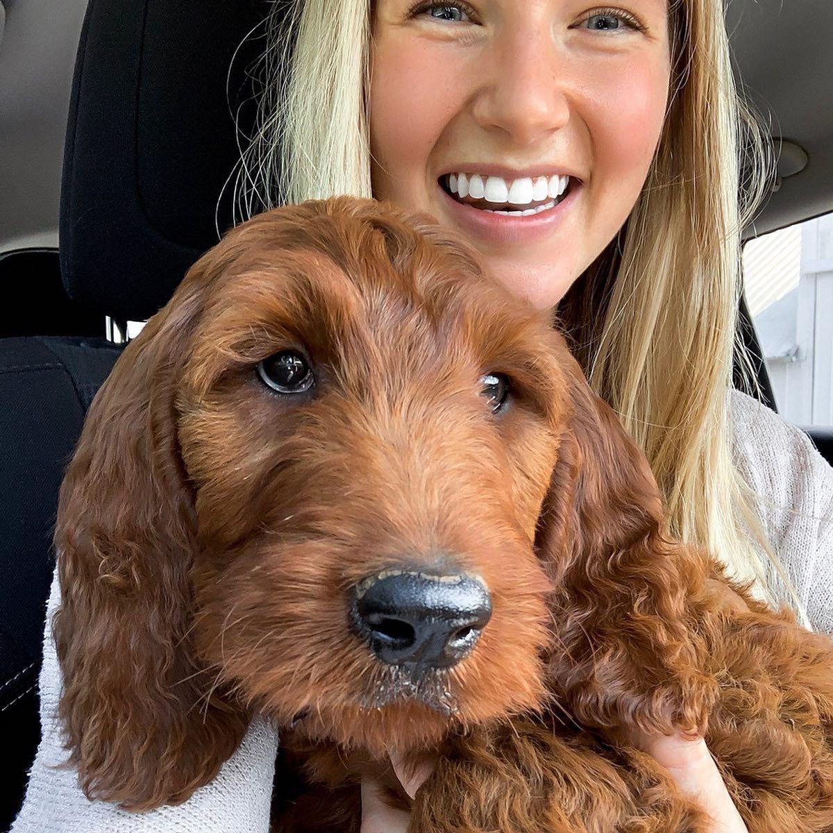 Newton 8 Weeks Old Irish Doodle See More On Instagram Macylenertz Irishdoodle Doodle Puppy Irish Doodle Doodles Irish