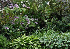 Hortensien Funkien Und Graser Im Halbschatten Straucher Garten Samthortensie Pflegeleichter Garten