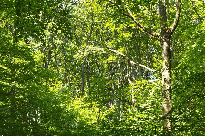Wald in Schichten im Grumsiner Forst
