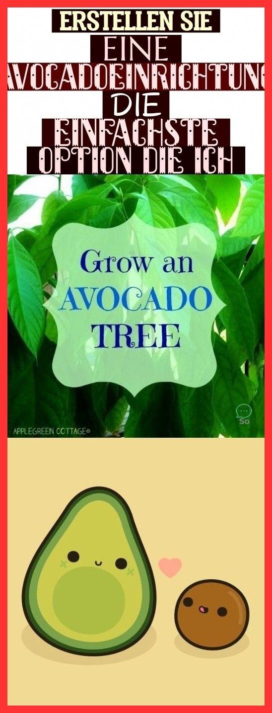 Erstellen Sie Eine Avocado-Einrichtung - Die Einfachste Option Die Ich ! erstellen sie eine avocado
