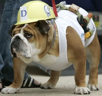 Dog Costume Ymca Construction Worker He Is Perfect For This