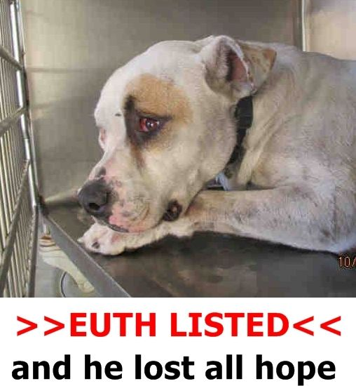 KILLED 11/9/15 -I´M SO VERY SORRY LOVE - THIS MAKES ME CRY....REST PEACEFULLY SWEETHEART -- CAMERON #A1238514 (MUST EXIT ON 10/27) I am a male, white and beige Pit Bull Terrier. The shelter staff think I am about 2 years old. I have been at the shelter since Oct 22, 2015 Riverside County Animal Control - City of Colton at (951) 358-7387 https://www.facebook.com/photo.php?fbid=10204362013764335&set=a.3186215868195.111836.1649756531&type=3&theater