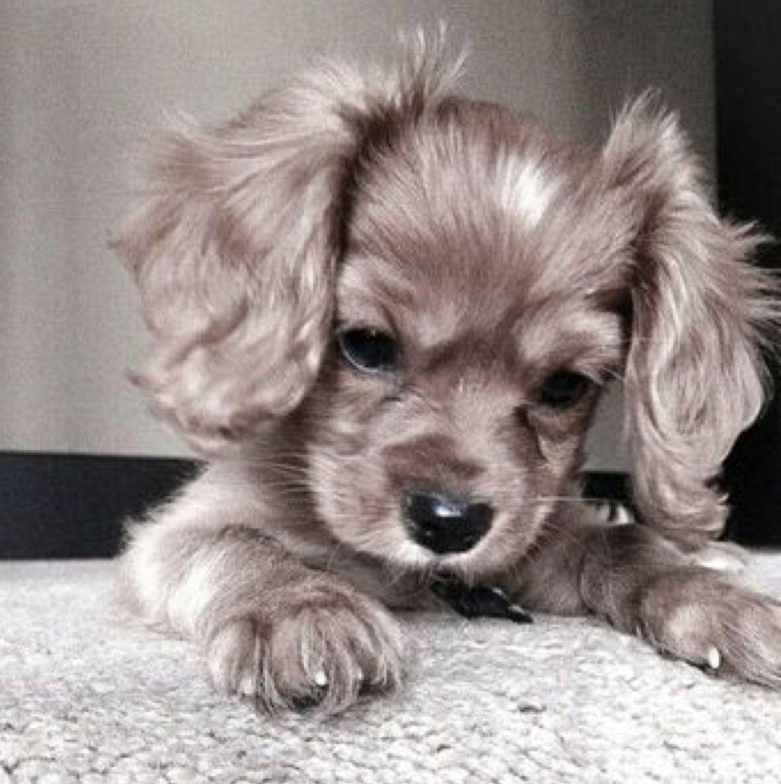 Pin By Irinavaleria On Puppies Cute Baby Animals Cute Dogs