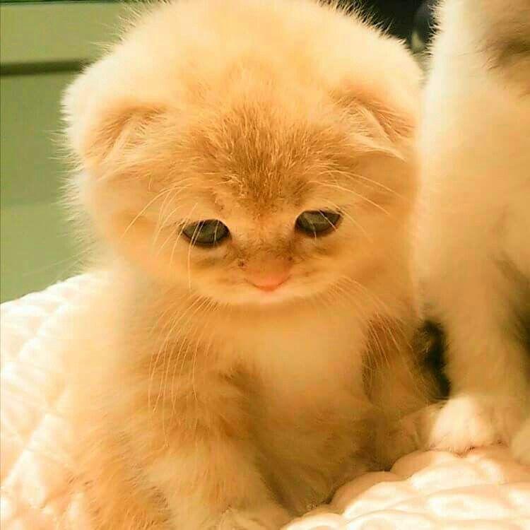 So cute...!