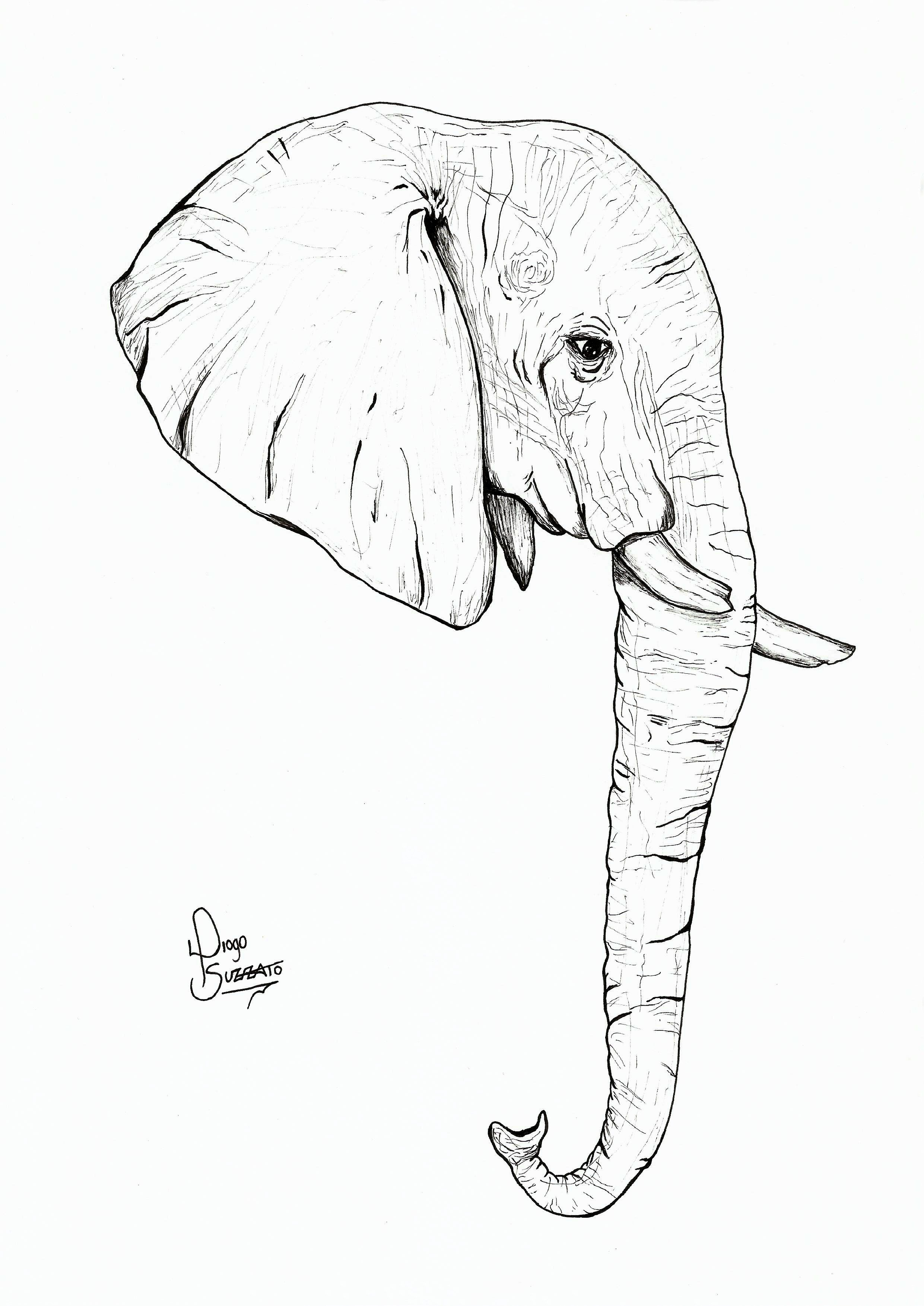 Original Draw Elephant Head Elephant Head Drawing Elephant Design Drawings Elephant Sketch