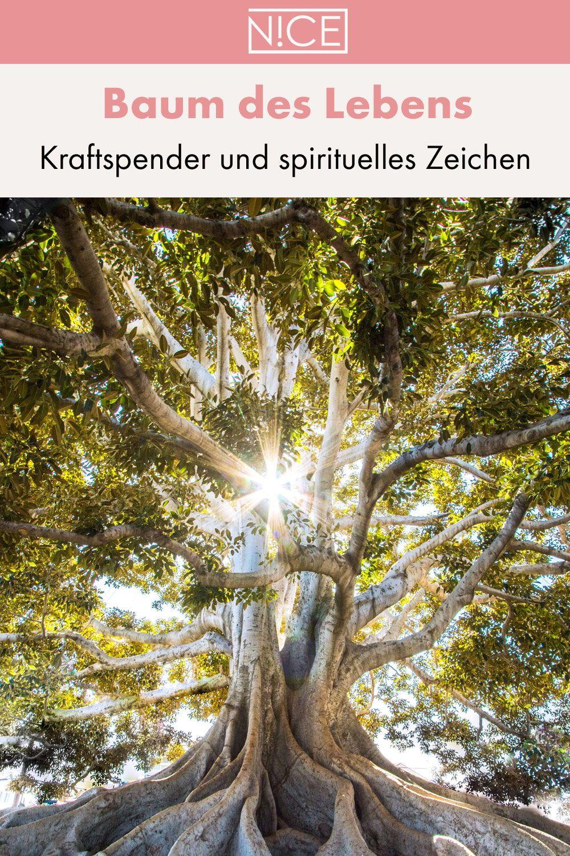 Der Baum Des Lebens Kraftspender Und Religioses Zeichen Baum Des Lebens Baum Des Lebens Bedeutung Baum