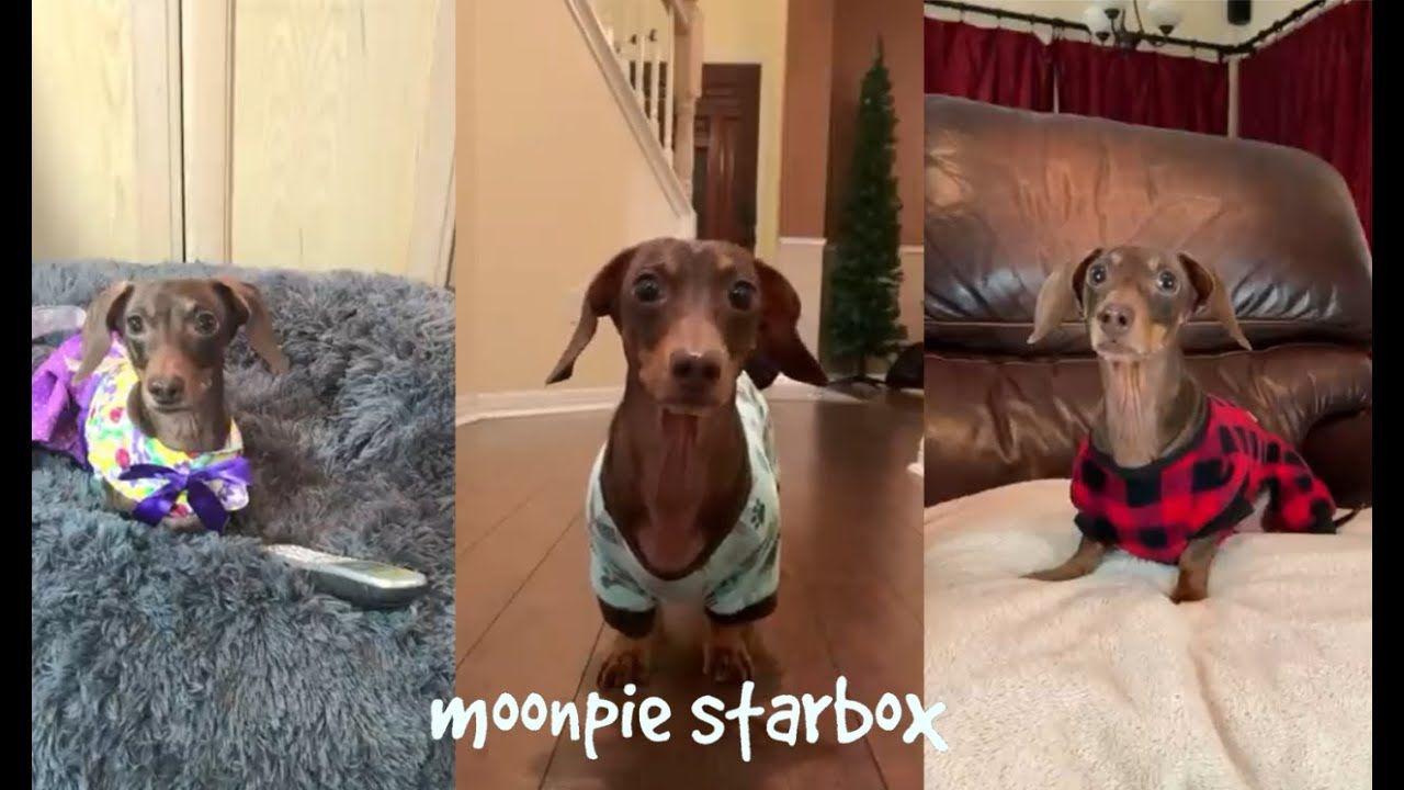 Chapter 4 Moonpie Starbox Tik Tok Compilation in 2020