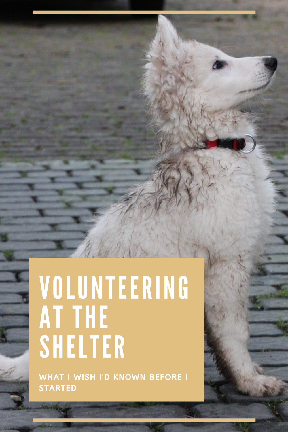 Volunteering At An Animal Shelter What I Wish I D Known Animal Shelter Volunteering With Animals Animal Shelter Volunteer