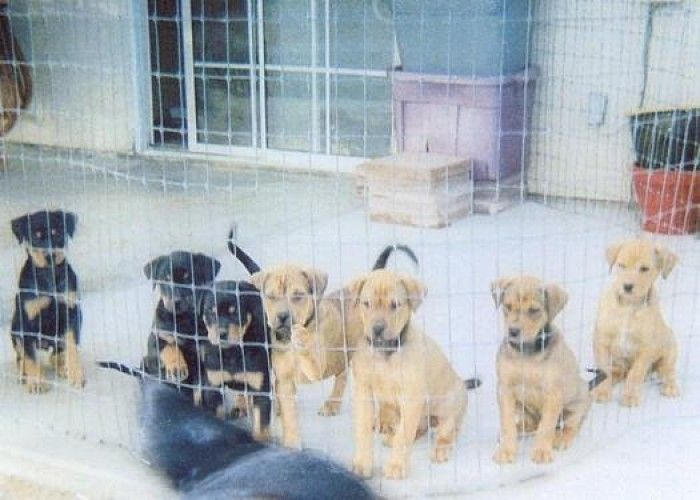 Puppies For Free In Pittsburgh Pa Pennsylvania Puppies By Looking