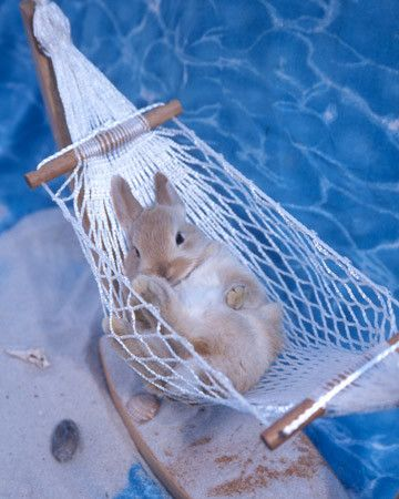 Spunky, a rabbit from Gilbert, South Carolina, lounges in a banana hammock. Contributed by Freelancer.