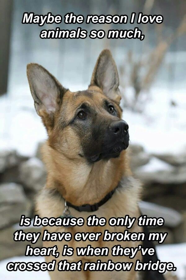 Maybe The Reason I Love Animals So Much Dogs German