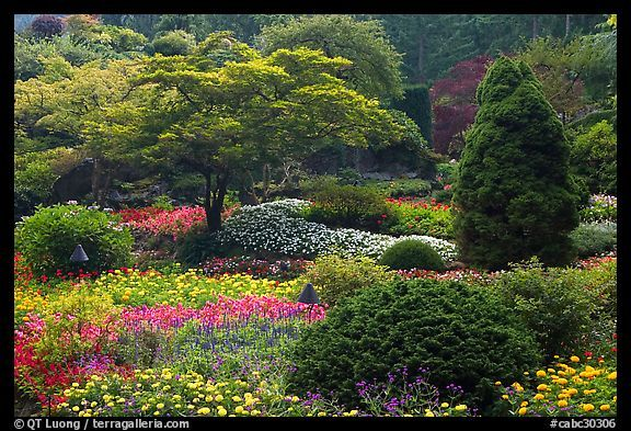 Annual flowers and trees in Sunken Garden. Butchart Gardens, Victoria, British Columbia, Canada #butchartgardens