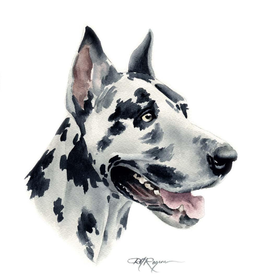 Greatdane Greatdaneart Harlequin Great Danes Great Dane Bulldog Art Print