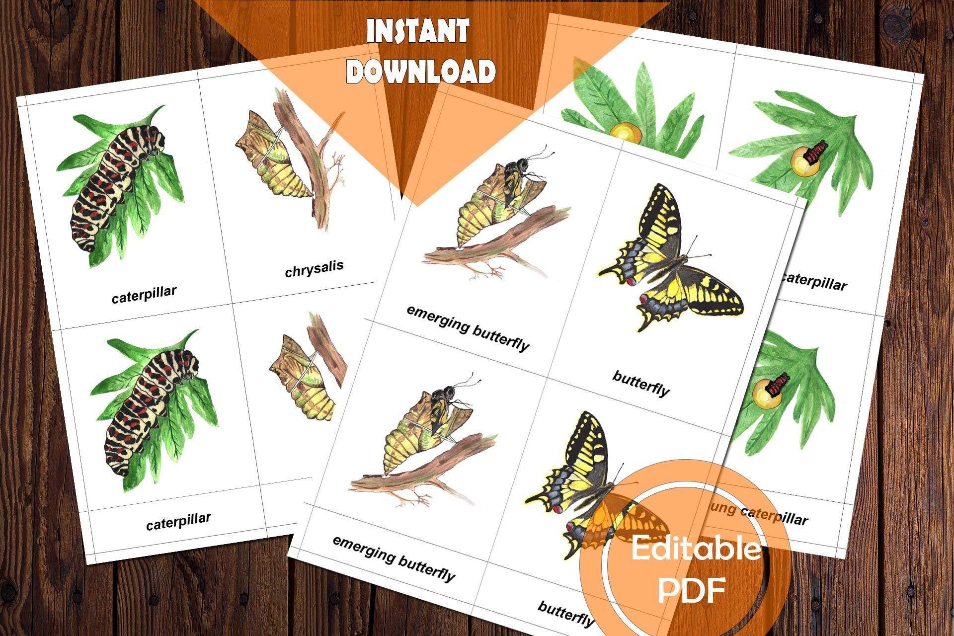 Butterfly Anatomy Amp Life Cycle Bundle Of Animal