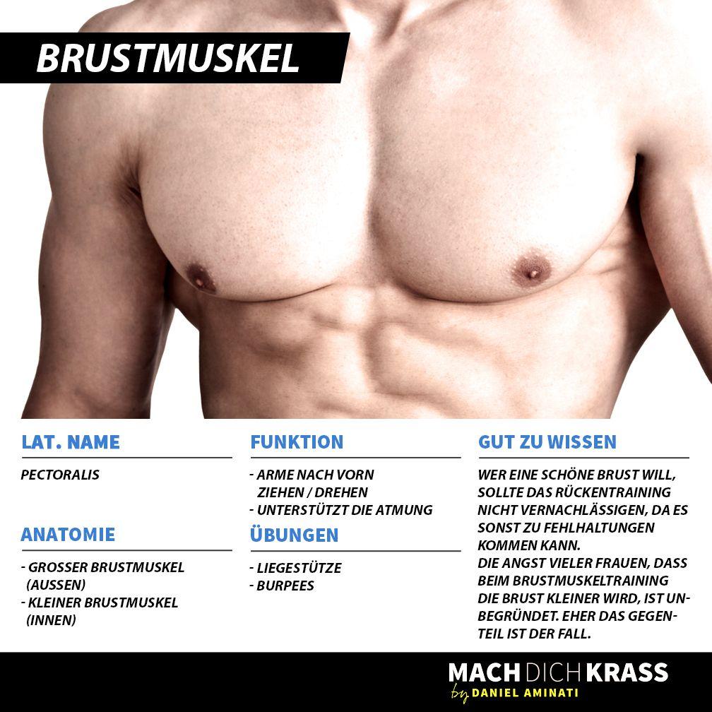 Brustmuskel   Muskelkunde   Pinterest