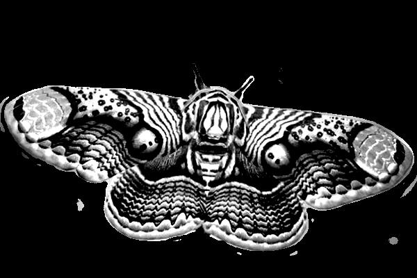 brahmin moth1d 30%