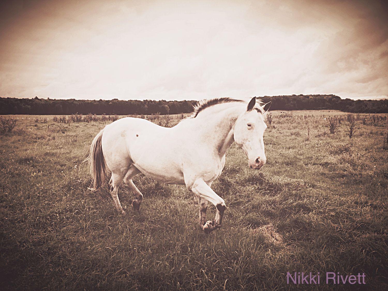 Horse, White, Appaloosa
