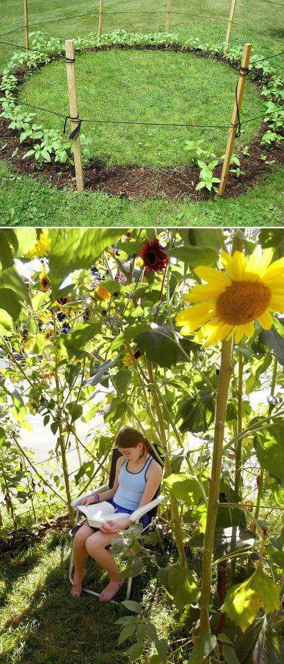 Grow A Sunflower Fort This Summer For The Kids Garten Sonnenblumenhaus Garten Ideen