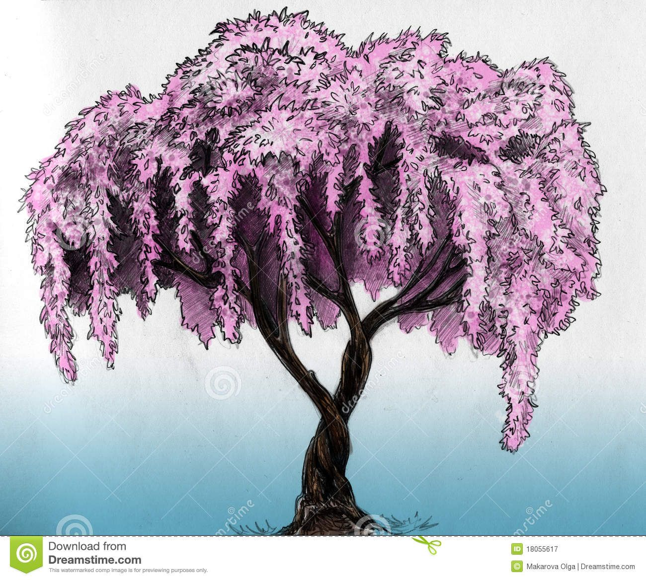 Uncategorized Cherry Blossom Tree Sketch sakura tree pencil sketch royalty free stock photography image image