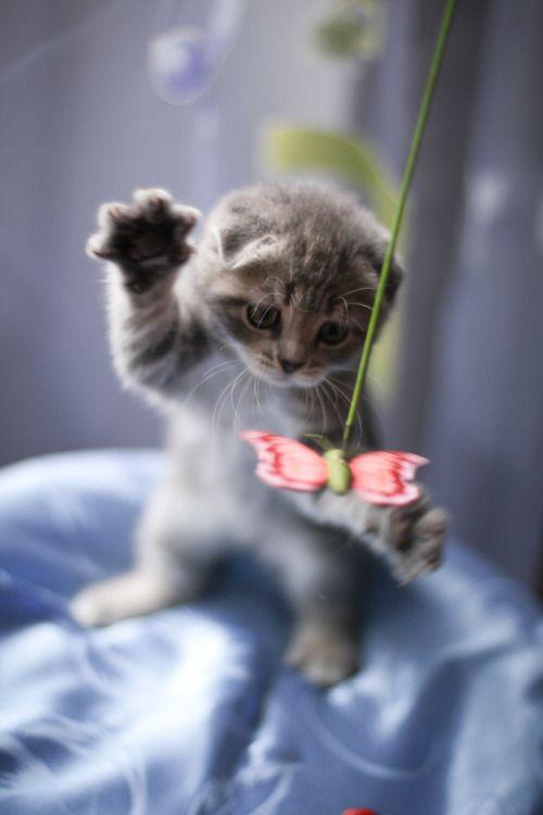 Cosas de gatitos...