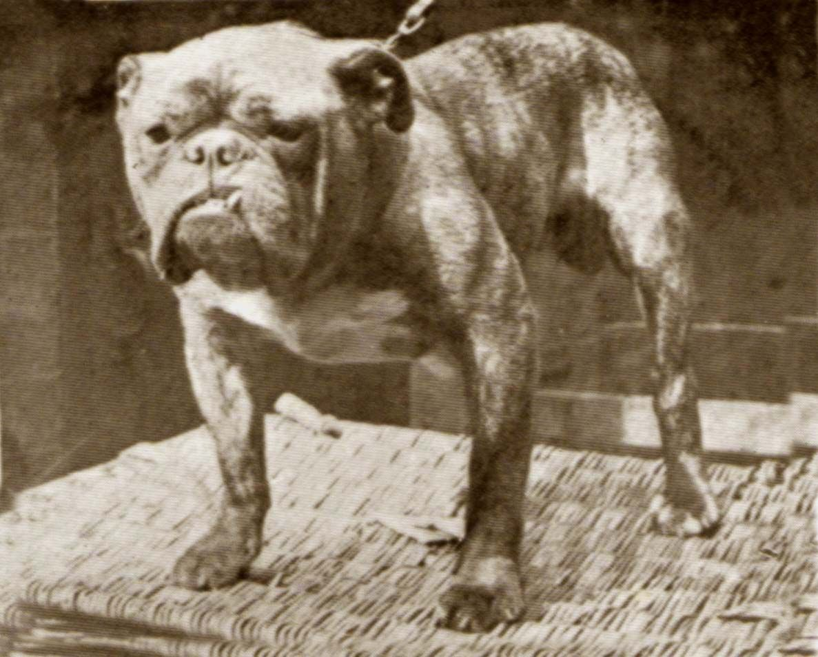 Name British Monarch Breed Bulldog Residence Country United