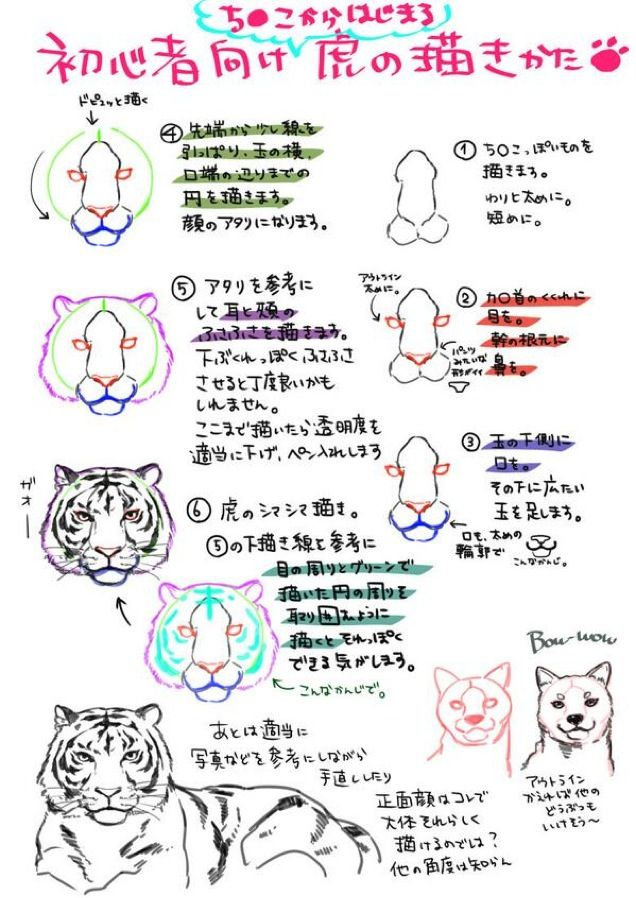 How To Draw a Tiger from a Penis | Anatomia dibujo, Bocetos y Anatomía