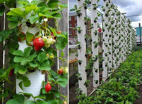 How To Make Vertical Strawberry Tube Planter Diy 400 x 300