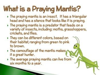Praying Mantis An Interactive Powerpoint Presentation Of Their Life Cycle Interactive Powerpoint Presentation Praying Mantis Interactive Powerpoint