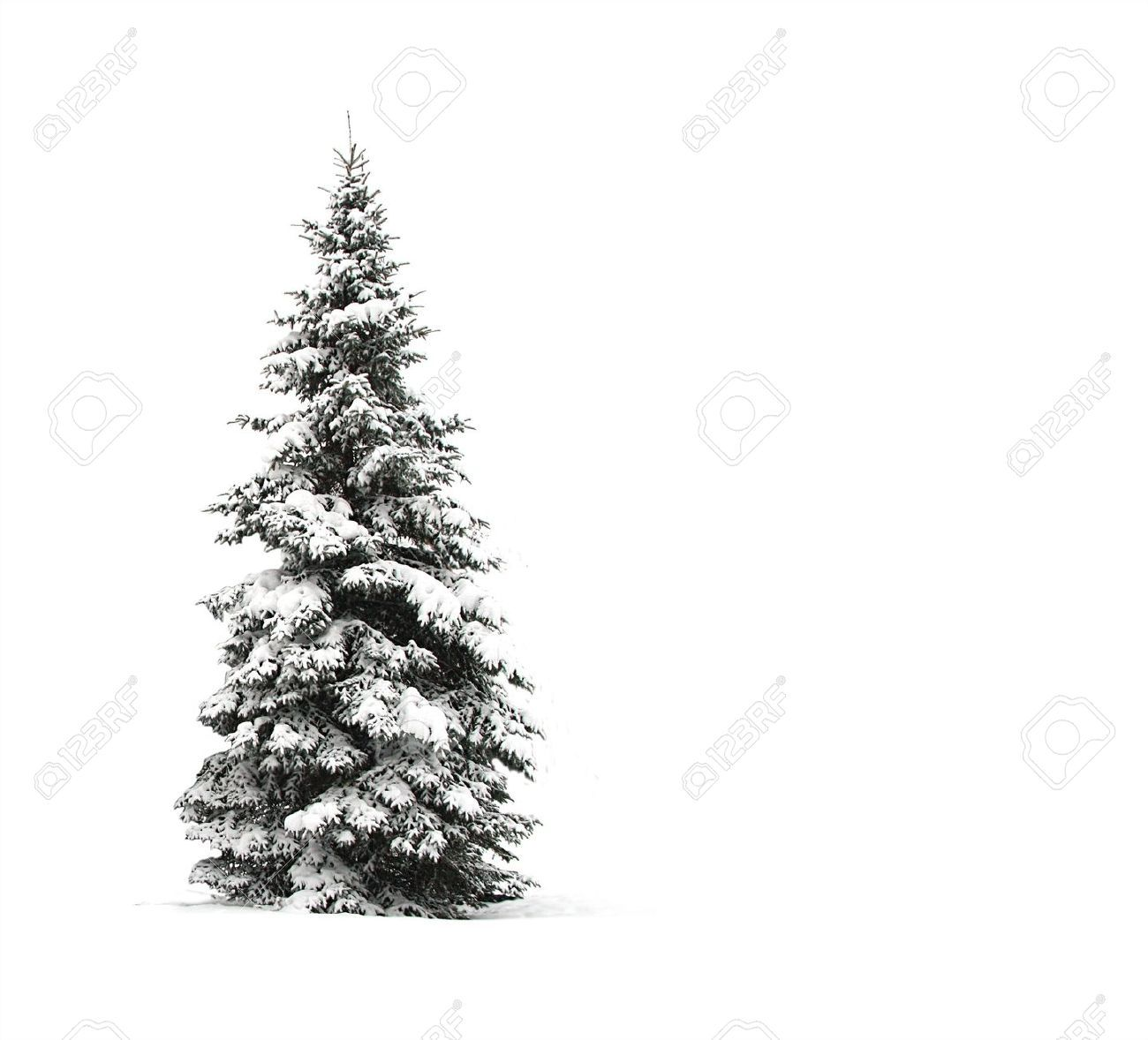 Image Result For Pinetree With Snow Art Inspiration Botanical