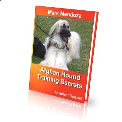 obedient-dog.net/... If you want to know all about the Afghan, your best solution is the new Afghan training book. With the Afghan training book you will know how to train an Afghan. With the Afghan training book your dog will obey all your rules.