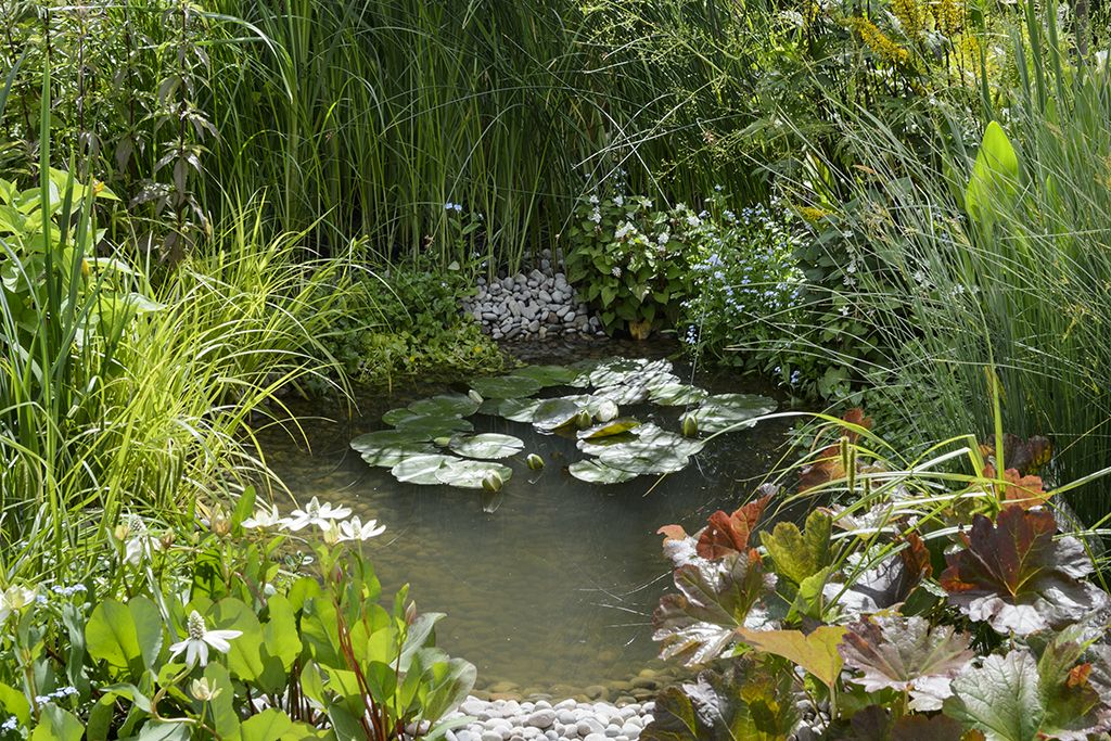 How to maintain a garden pond ponds and water gardening for Small pond care