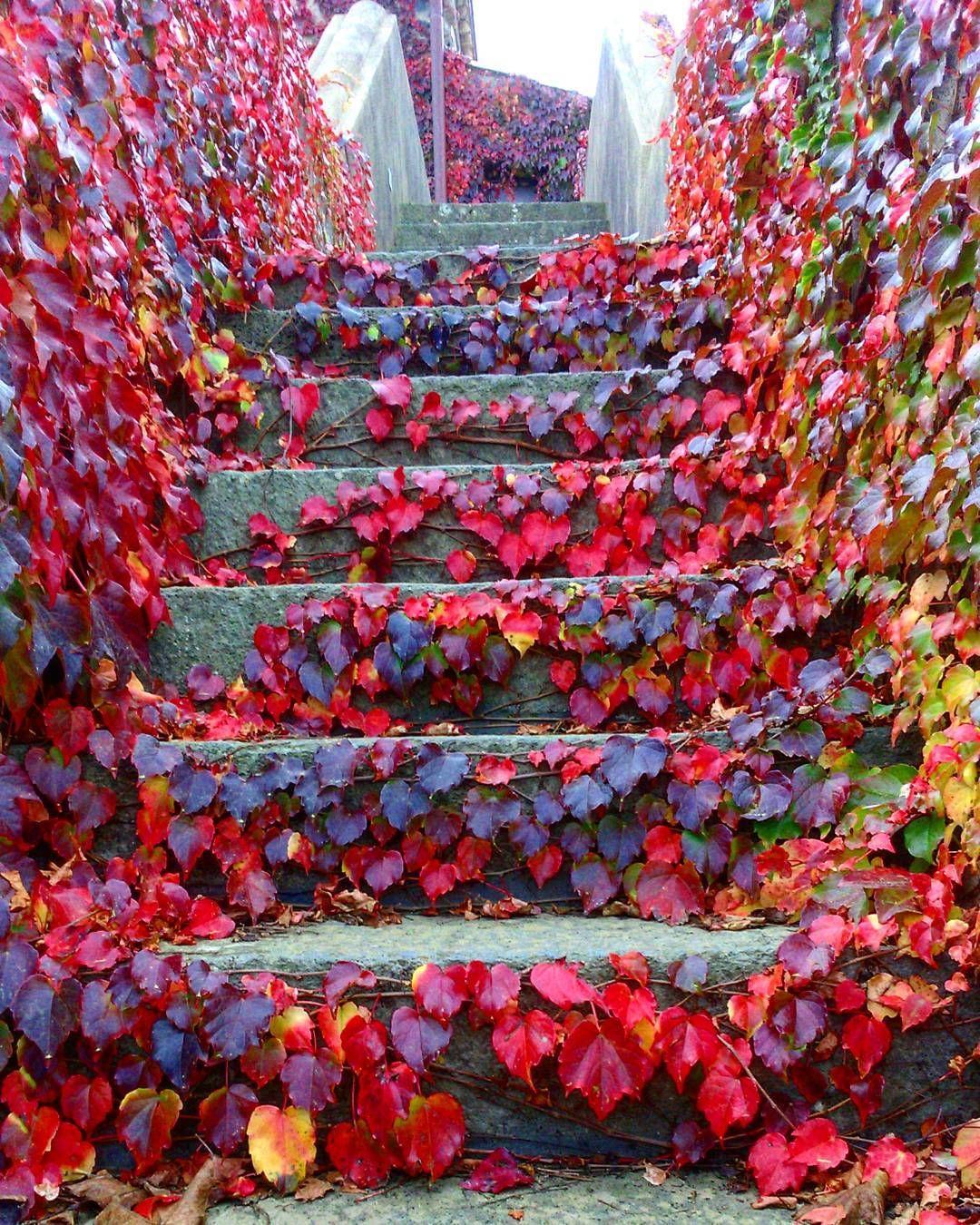 Red Carpet Sicily Autumn Tour Moscamentoestate Naturaldesign Relax Lifestyle Etna Wine Winter Drinking Etn Nature Design Instagram Posts Instagram