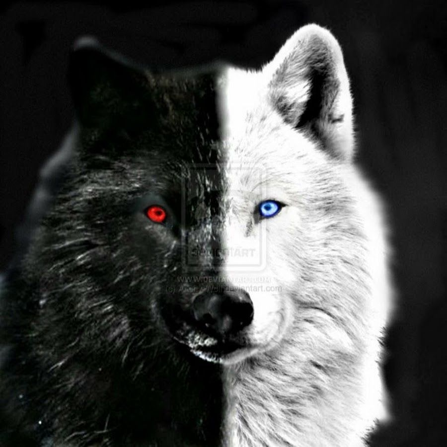 Bildergebnis Fur Black Wolf With Red Eyes Wolf Eyes Wolf With