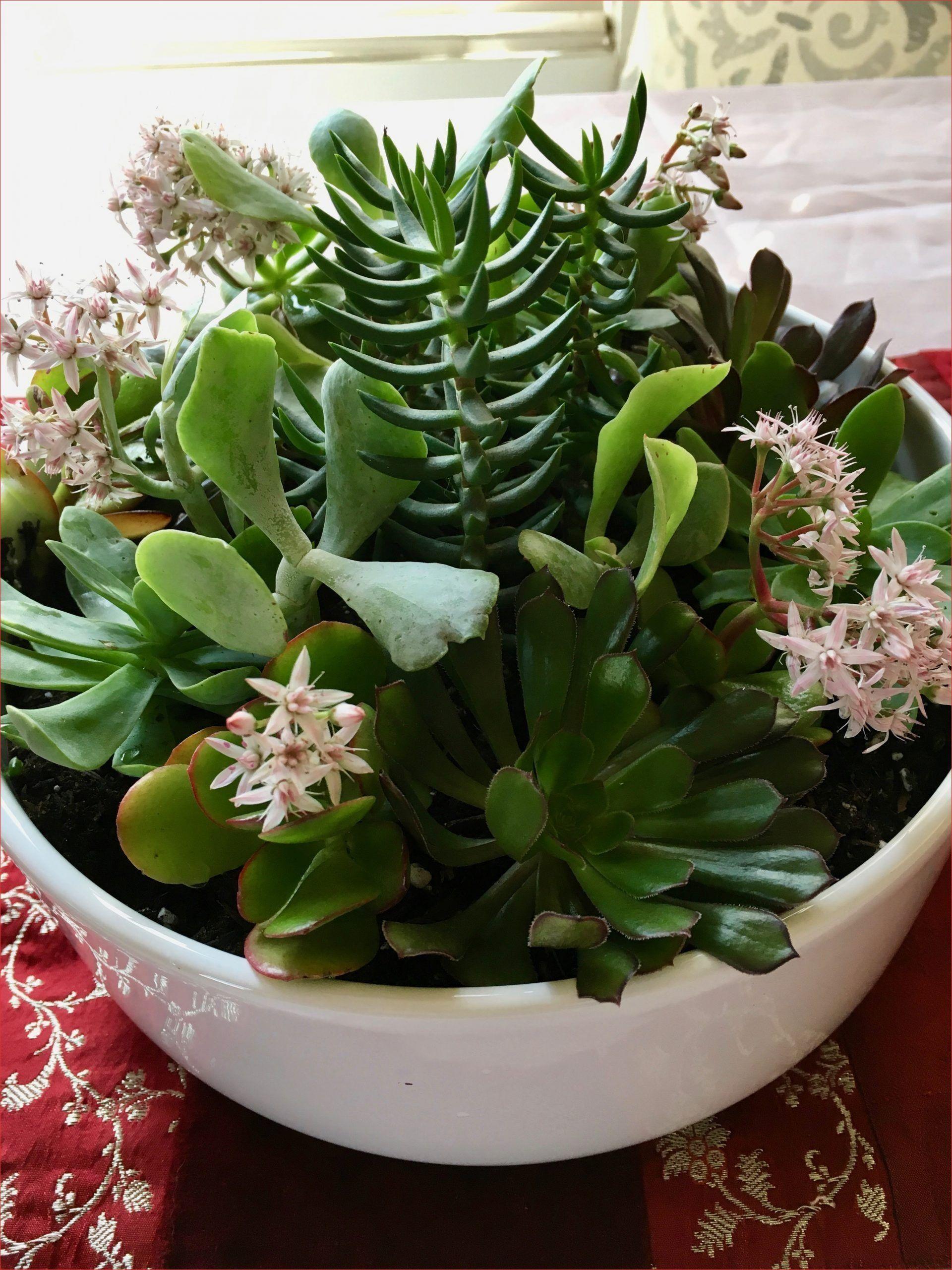 Luxury Low Maintenance Indoor Succulent Garden Ideas For Winter
