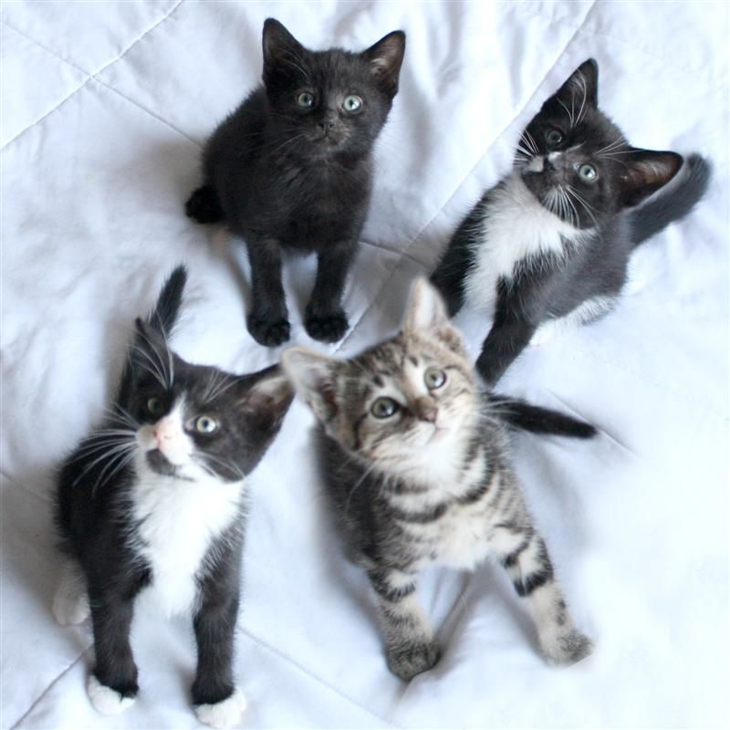 Ready to Rumble! Kittens available for adoption through