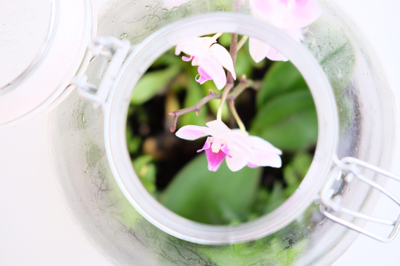 Orchideen Fuers Schlafzimmer