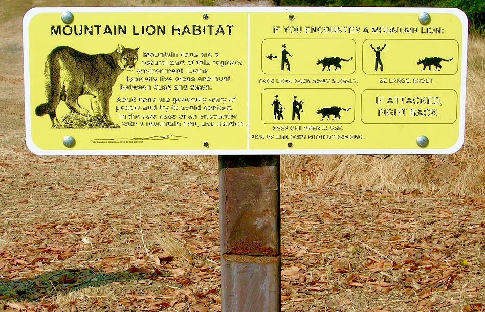 Image result for mountain lion warning signs