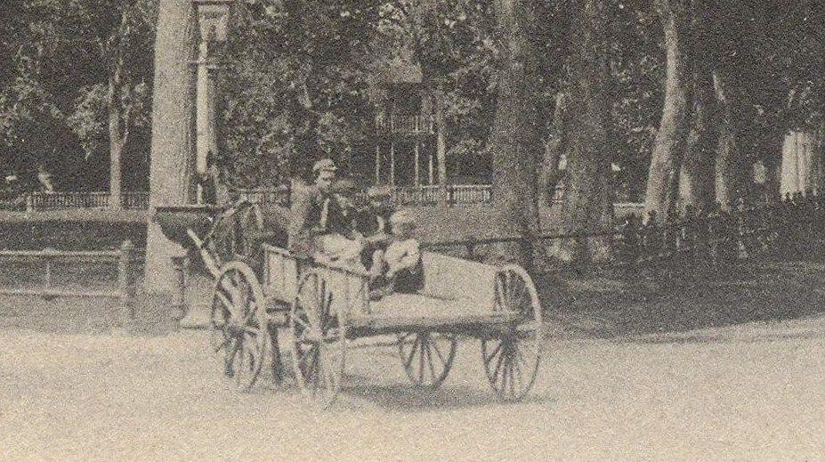Closeup on Cart. Horse drinking.