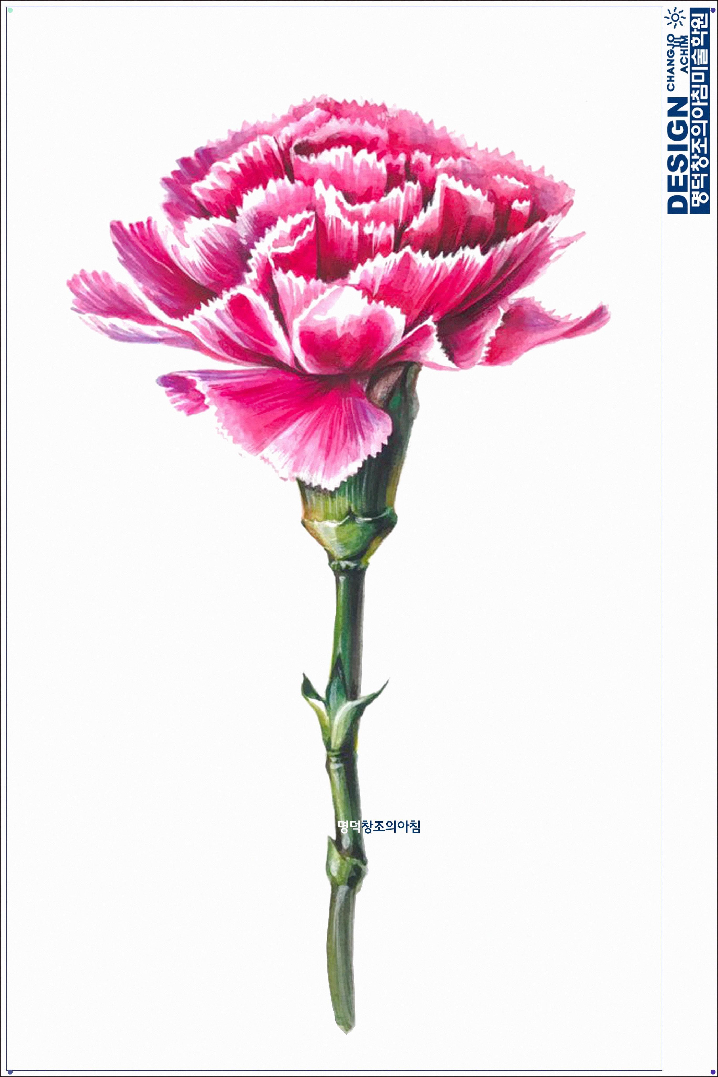 Carnation In 2020 Flower Drawing Flower Art Pencil Drawings Of Flowers