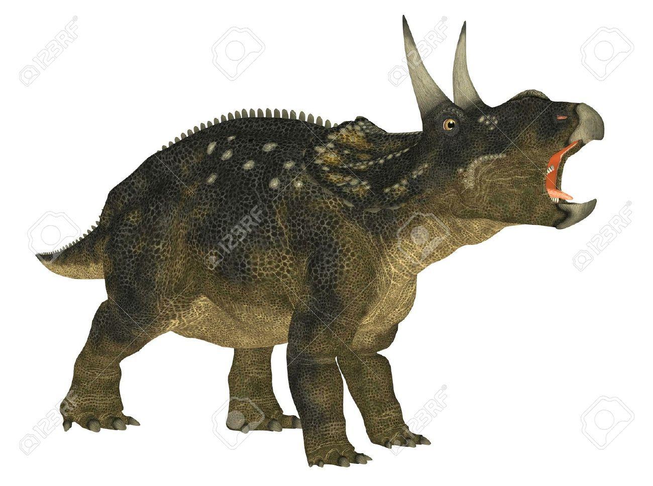 Diceratus Junior Synonym Of Nedoceratops Dinosaur Pictures