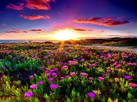 Summer Meadow At Sunset Desktop Nexus Wallpapers Sunset Nature Seascape Photography Beautiful Nature