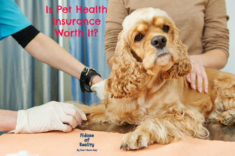 Is Pet Health Insurance Worth It Pet health insurance